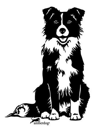 Border Collie Grafiklizenz
