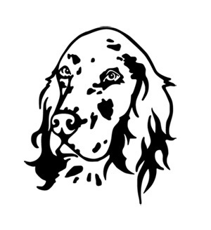 English Setter Wandtattoo Kopf